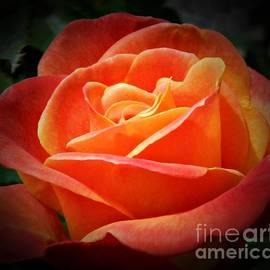 Chalet Roome-Rigdon - Orange Rose