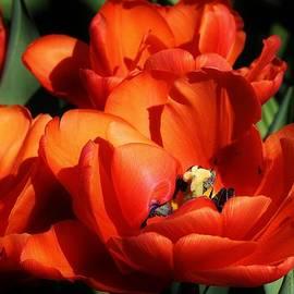 Bruce Bley - Orange Sensation