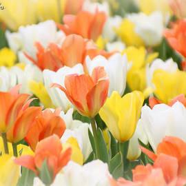 Amy Steeples - Orange Sherbert