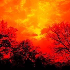 Bliss Of Art - Orange Sky and Trees
