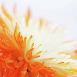 Lisa Knechtel - Orange Whisper
