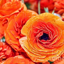 Diana Sainz - Orange You Happy Ranunculus Flowers By Diana Sainz