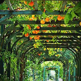 Brooke Ryan - Oranges and Lemons on a Green Trellis