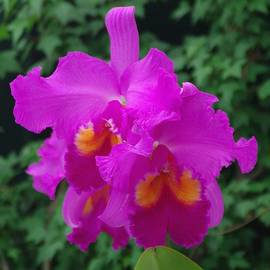 Sheila Byers - Orchid 4