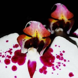 Sharon Ackley - Orchid Abstract 3
