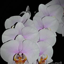 Chalet Roome-Rigdon - Orchid Bunch