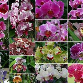 Allen Beatty - Orchid Collage 1