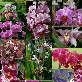 Allen Beatty - Orchid Collage 3