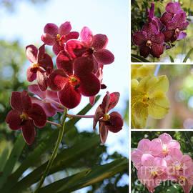 Carol Groenen - Orchid Collage