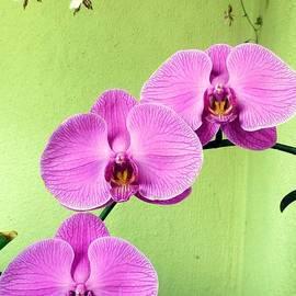 Barbie Corbett-Newmin - Orchid Corner
