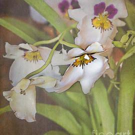 TN Fairey - Orchid display