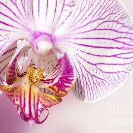 Gosia K - Orchid Flower