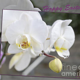 Linda Troski - Orchid Frame for Easter