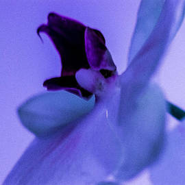 Sheree Lauth - Orchid Ice