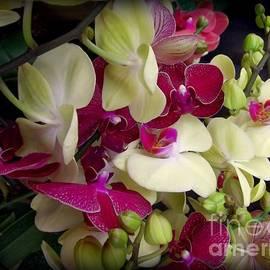 Miriam Danar - Orchid Jumble