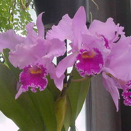 Kay Gilley - Orchid Love