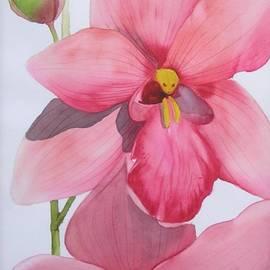Mishel Vanderten - Orchid