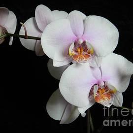 Chalet Roome-Rigdon - Orchid Portrait