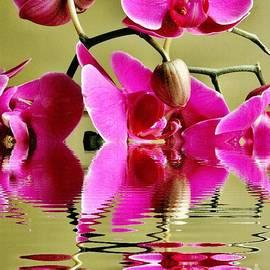 Judy Palkimas - Orchid Reflection