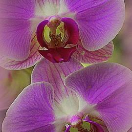 Photographic Art and Design by Dora Sofia Caputo - Orchid Rhapsody