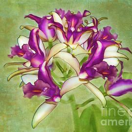 Judi Bagwell - Orchid Spray