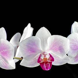 Bill Morgenstern - Orchid Trio Plus One