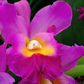 Rona Black - Orchid Variations 1