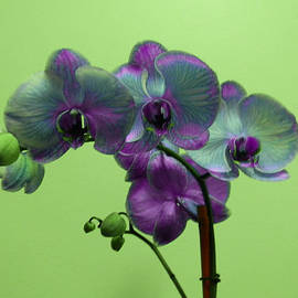 Christy Usilton - Orchid with Green