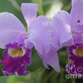Rudi Prott - Orchids 1