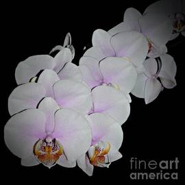 Chalet Roome-Rigdon - Orchids 3