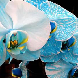 Julie Palencia - Orchids 3