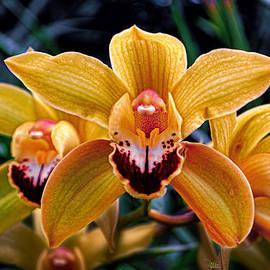 Douglas MooreZart - Orchids 4