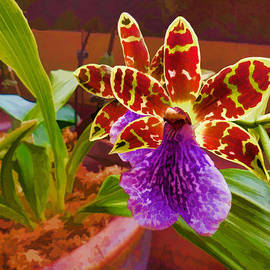 Douglas MooreZart - Orchids 5