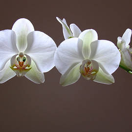 Juergen Roth - Orchids Illuminated
