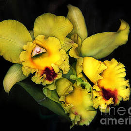 Judi Bagwell - Orchids on Black