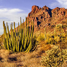 Bob and Nadine Johnston - Organ Pipe Cactus National Monument Afternoon