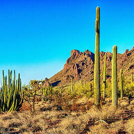 Bob and Nadine Johnston - Organ Pipe Cactus National Monument Late Afternoon