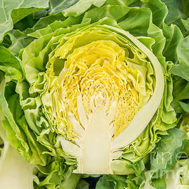 Leyla Ismet - Organic White Cabbage Cut Down The Middle