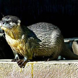 Miroslava Jurcik - Oriental Small-clawed Otter