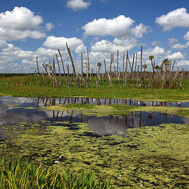 Mike Reid - Orlando Wetlands Cloudscape 2