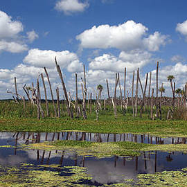 Mike Reid - Orlando Wetlands Cloudscape