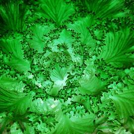 Irina Kartasheva - Ornamental Cabbage