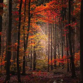 Philippe Sainte-Laudy - Orton Forest