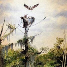 Bill Holkham - Ospreys Nesting Wakulla River