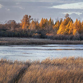 Scott Norris - Ottawa Lake Fen in Autumn