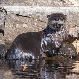 Richard Kitchen - Otter Posing