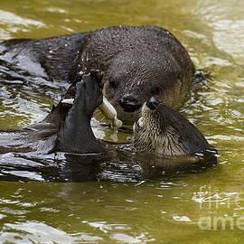 Anne Rodkin - Otter Stealth Attack