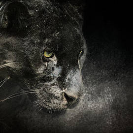 Jai Johnson - Out of the Shadows - Wildlife - Black Leopard