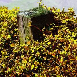 RC deWinter - Overgrown