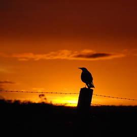 Paul  Farrant - Overseeing Sunset